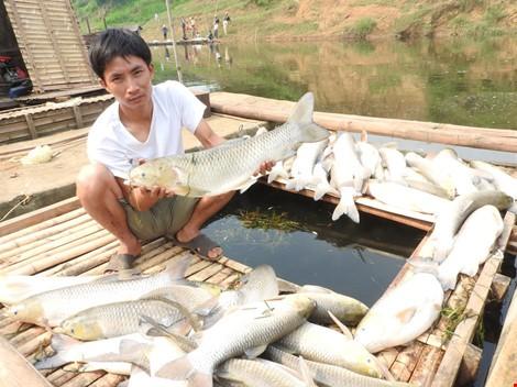 """Vụ ô nhiễm sông Bưởi: Phạt 4 tỉ, buộc """"rửa"""" sạch ô nhiễm"""