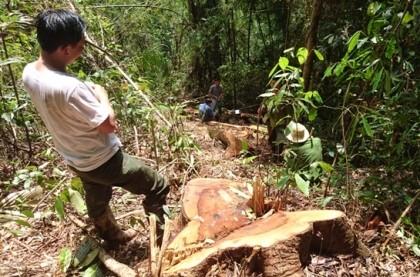 Ra lệnh bắt trùm lâm tặc phá rừng thủy điện Đồng Nai 5