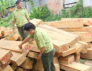 Vụ phá rừng pơ mu 'khủng': 'Nếu cán bộ tiếp tay, sẽ bị tước quân tịch'