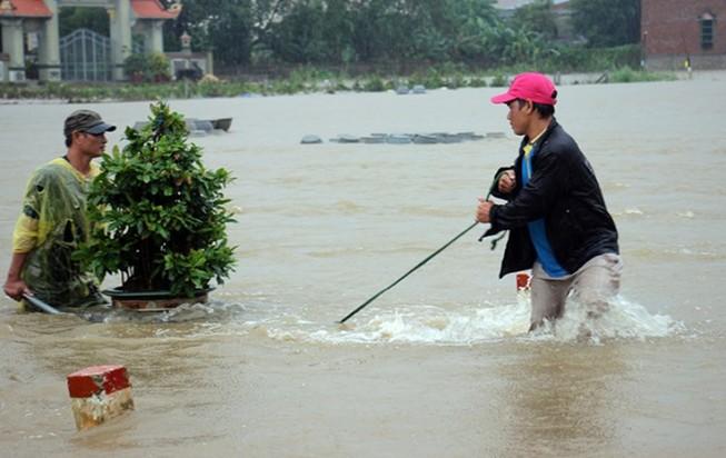 Người dân Bình Định 'vật lộn' trong lũ để cứu mai