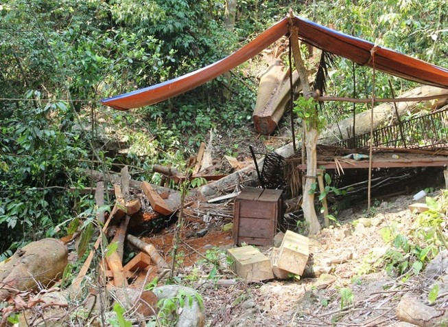Vụ phá rừng phòng hộ: Xử lý nghiêm
