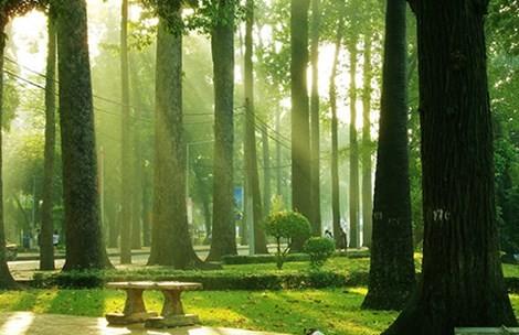 Audio: Lại 33 cây xanh nữa sắp 'thọ án'