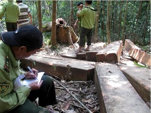 Cắm mốc ranh giới nơi diễn ra vụ phá rừng lớn chưa từng có