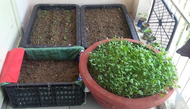 Xúc tiến đề án trồng rau sạch trên địa bàn trong tháng 4