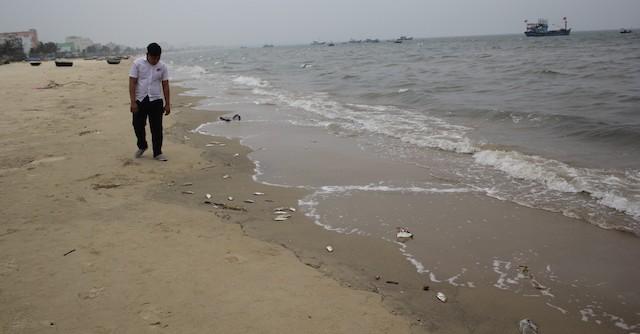Cá chết xuất hiện dọc bãi biển Đà Nẵng