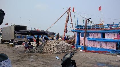 Đà Nẵng: Tổng kiểm tra mẫu cá tại tất cả các kho lạnh