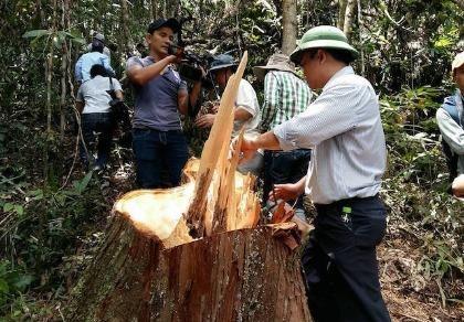 Làm rõ và xử nghiêm cán bộ để lâm tặc phá rừng Quảng Nam