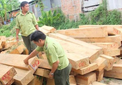 Ba lãnh đạo biên phòng bị tạm đình chỉ vì vụ phá rừng pơ mu