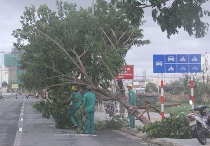Đà Nẵng: Cây ngã đổ, bật gốc tại nhiều tuyến đường sau bão