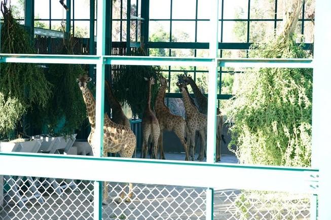 Bác bỏ thông tin thú nuôi bị chết trong vườn thú Safari Phú Quốc