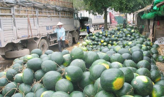 Trung Quốc thuê hàng trăm hecta trồng dưa hấu ở Lào, Campuchia