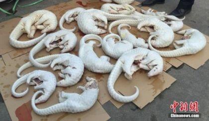 Trung Quốc tịch thu hơn 2.600 xác tê tê lậu