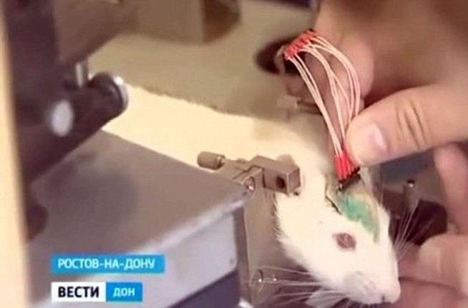Nga dùng chuột làm 'vũ khí bí mật' để tiêu diệt IS