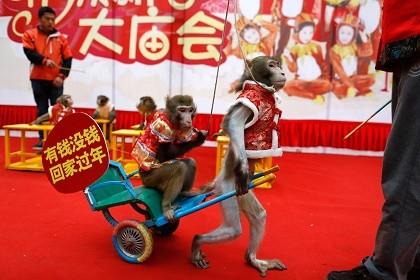Năm con khỉ, xiếc khỉ lên ngôi