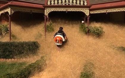 Loài cỏ kỳ lạ 'nuốt chửng' cả thị trấn ở Úc