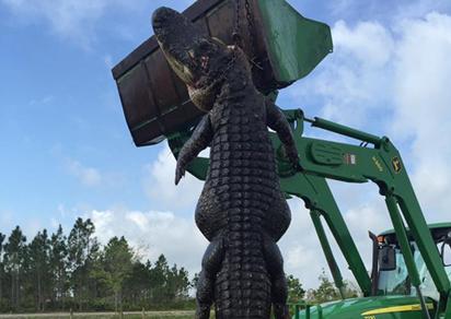 Mỹ bắn chết cá sấu 380 kg ăn thịt gia súc