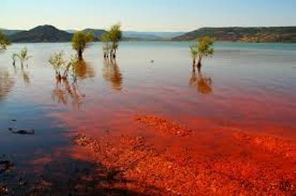 Cá chết hàng loạt vì 'thủy triều đỏ', hàng ngàn ngư dân phẫn nộ