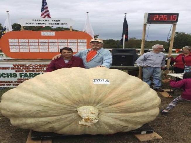 Sốc với quả bí ngô 'kỷ lục', nặng hơn 1 tấn ở Mỹ