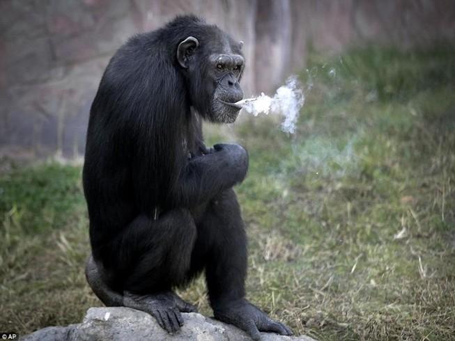 Tinh tinh hút 20 điếu thuốc 1 ngày gây bão ở Triều Tiên