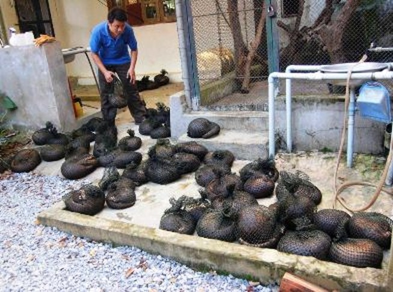70 động vật quý hiếm 'kêu cứu' vì vướng... Luật Tố tụng hình sự