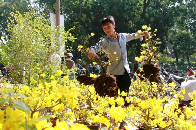 Giá hoa tết giảm mạnh, người Sài Gòn ùn ùn đi mua 'ủng hộ'