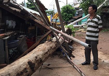 Nhân viên cây xanh đang kiểm tra thì cây đổ đè sập nhà