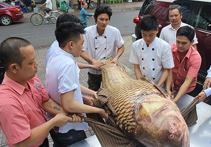 Cá hô quý hiếm hơn 1 tạ lại về nhà hàng tại TP.HCM