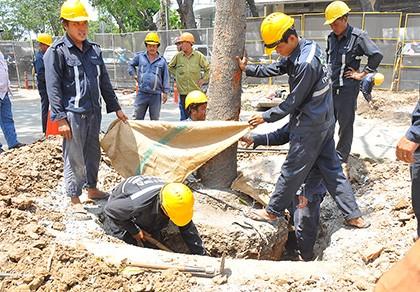 Đốn hạ cây trên đường Tôn Đức Thắng là 'việc chẳng đặng đừng'