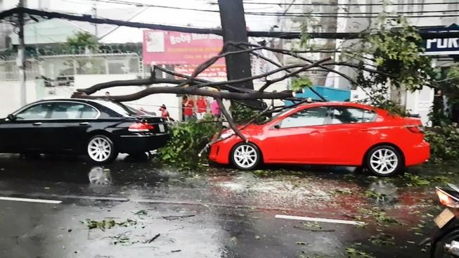 Cây xanh liên tục ngã đổ đè nhiều ô tô ở TP.HCM