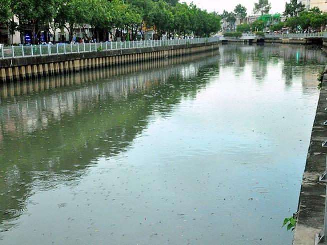 Cá lại nổi đặc kênh Nhiêu Lộc - Thị Nghè