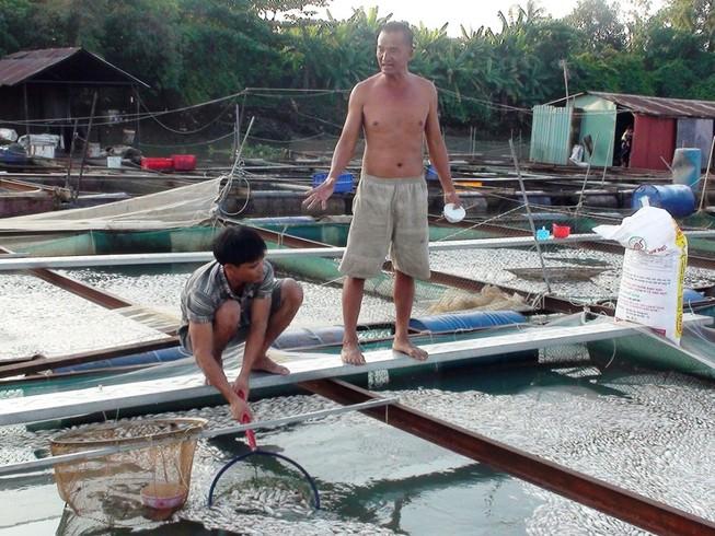 Cá bè trên sông Cái lại chết hàng loạt không rõ nguyên nhân