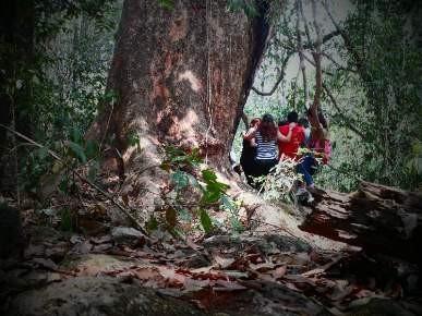 Vào rừng Nam Cát Tiên ngắm cây gõ bác Đồng 700 năm tuổi