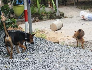Hàng xóm đánh nhau chấn thương sọ não vì... con chó