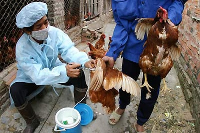 Nghệ An: Không có bệnh nhân bị nhiễm cúm A/H5N6