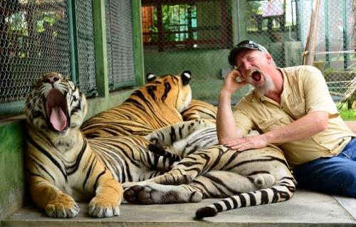 Dịch vụ ngủ cùng hổ ở Nga