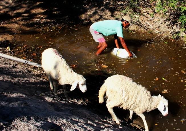Những vũng nước cứu làng