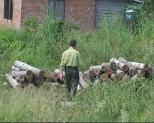 Phát hiện hơn 20 mét khối gỗ lậu tập kết bên quốc lộ 14