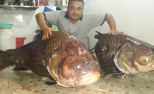 Ngư dân Thái Bình bán hớ cá 'thần tài' 1,5 tỉ đồng