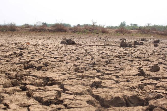 Bình Phước thiệt hại hơn 670 tỉ đồng do khô hạn kéo dài