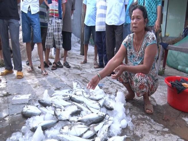 Huế: Dân điêu đứng vì cá lồng chết bất thường