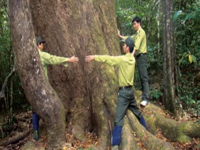 Trạm trưởng Vườn quốc gia Cát Tiên bị đâm trọng thương
