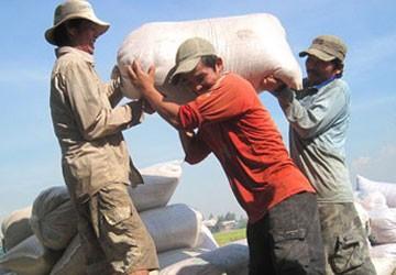 Gạo ồ ạt chảy sang biên giới