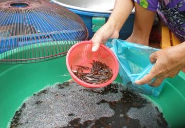 Bắt, bán cá con coi chừng bị phạt