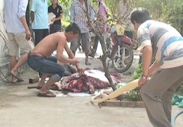 Bùng phát nạn trộm trâu, bò ở Đồng Nai