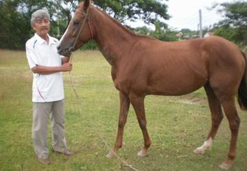 Ký ức Trường đua Phú Thọ - Bài 1: Nước mắt chủ ngựa