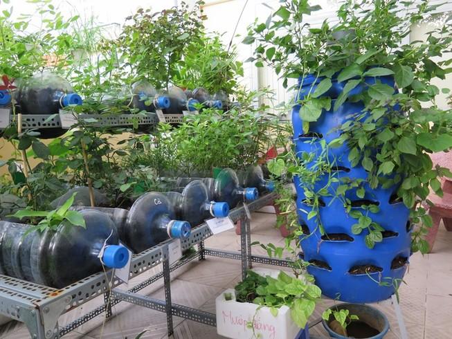 Lạ mắt vườn cây từ vật dụng tái chế của học sinh lớp 8