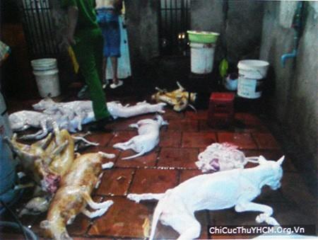 Tiêu hủy chó không giấy chứng nhận kiểm dịch