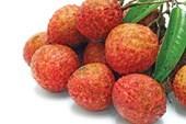 Trái vải thiều được miễn phí kiểm dịch thực vật