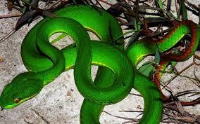 Bị rắn độc cắn, cần đến ngay bệnh viện nào?