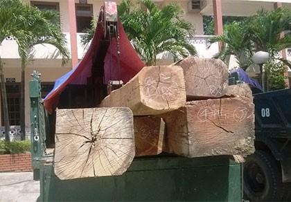 Cảnh cáo, xử phạt 45 triệu Hạt trưởng kiểm lâm mua gỗ lậu